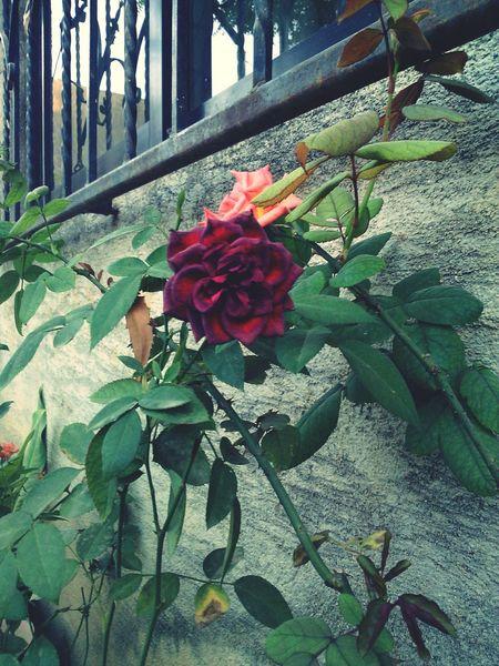 Flores de mi jardin.