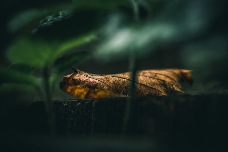 Moody EyeEm Nature Lover EyeEm Nature Collection Nature Photography Nature_collection Nature EyeEm Nature Lovers Selective Focus Plant Part Leaf Close-up No People Dry Day Beauty In Nature Plant Wood - Material Green Color Outdoors Food Food And Drink Falling Sunlight Leaves Still Life Autumn The Minimalist - 2019 EyeEm Awards The Great Outdoors - 2019 EyeEm Awards