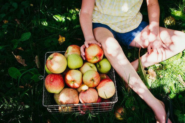 Midsection of a young girl picking apples
