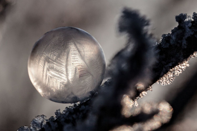 Branch Bubble Close-up Crystals Extreme Temperature Feathers Fragile Fragile Beauty From My Point Of View Frozen Frozen Bubbles Icy Light Nature No People Reflection Shiny Sunlight Tree Winter