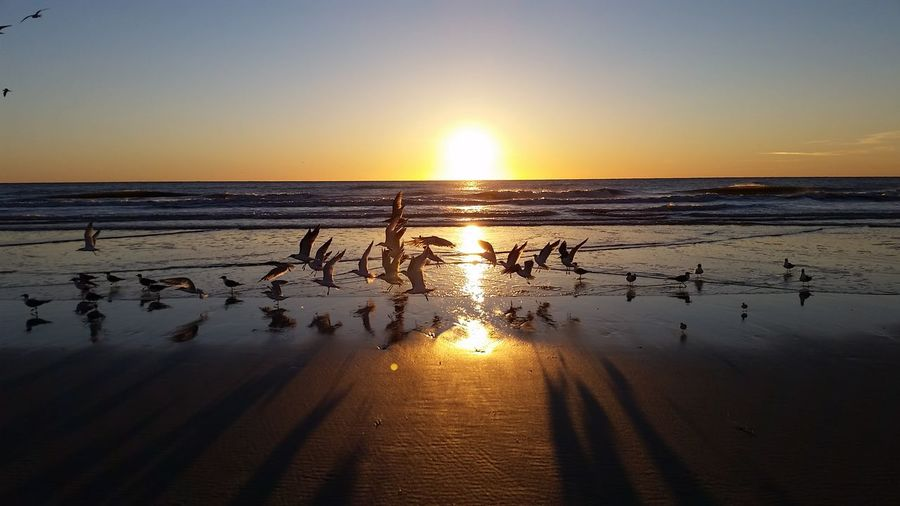 Flock of birds at beach against clear sky during sunset