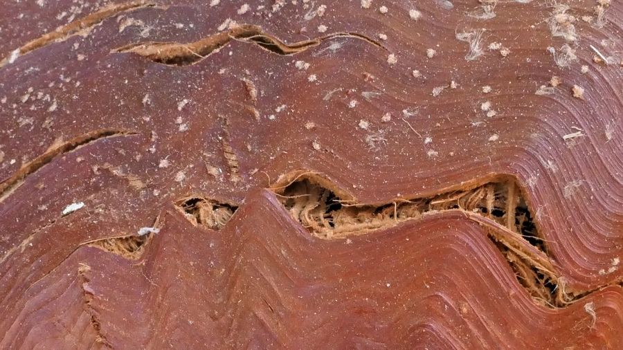 Natural Pattern No People Full Frame Close-up Pattern Nature Backgrounds Wood - Material Day Outdoors Textured  Brown