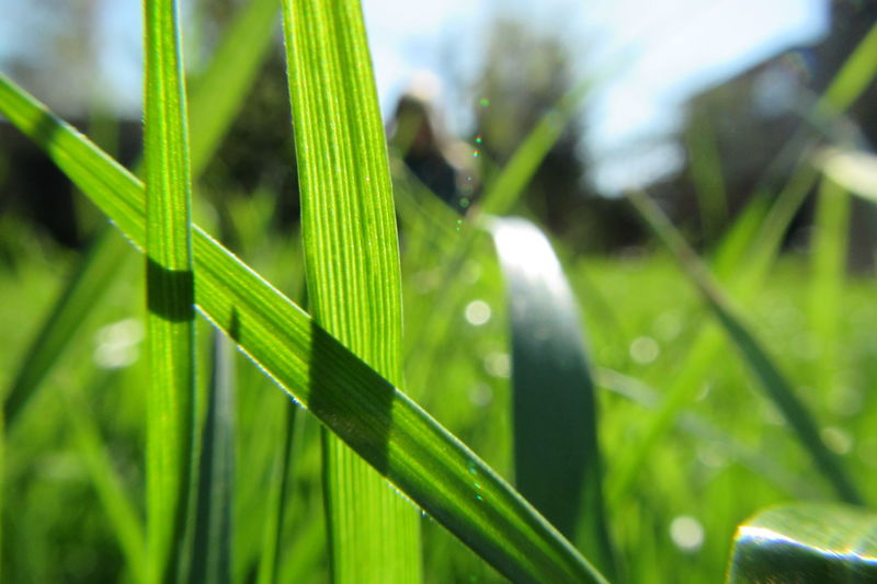 Close-up of fresh green leaf in field