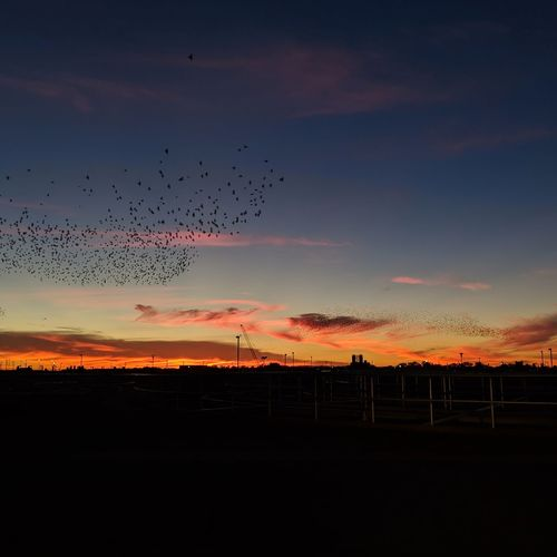 Bird Flying Sunset Mid-air Flock Of Birds Rural Scene Silhouette Sky Animal Themes Landscape Dramatic Sky Atmospheric Mood Storm Cloud Moody Sky Sky Only Group Of Animals Romantic Sky