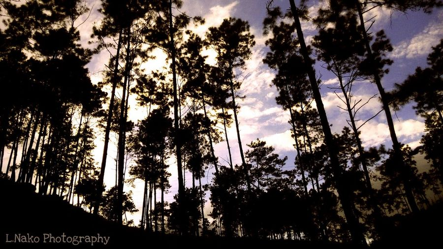 Shillong Outdoors Scenics Tranquility Pinegrove Pinegroove Near The Lake Beautiful Places