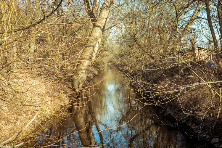 Tree Plant Forest Branch Bare Tree No People Nature Land Tranquility Water Beauty In Nature Tranquil Scene Day Reflection Non-urban Scene Trunk Scenics - Nature Tree Trunk WoodLand Outdoors Flowing Water Flowing