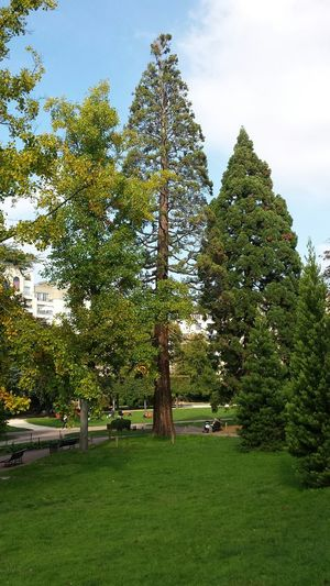 Parc De Vanves Seqouia Trees