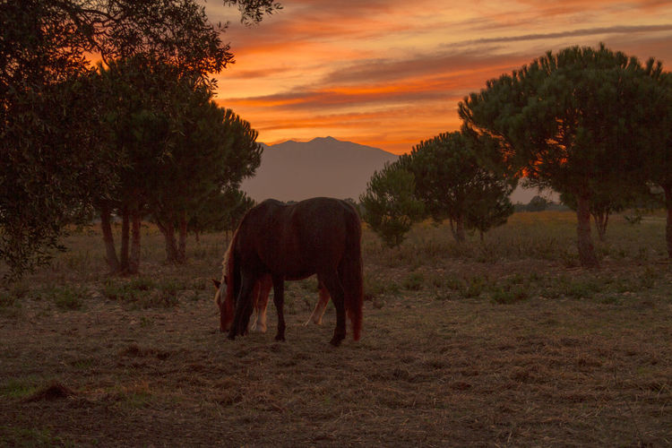 Orange Sky Animal Themes Beauty In Nature Day Domestic Animals Field Grazing Horse Landscape Livestock Mammal Nature No People One Animal Outdoors Scenics Sky Standing Sunset Tree