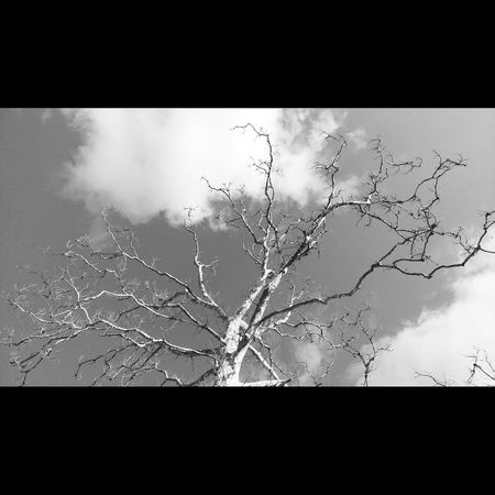 ready for spring! Tree Sky Skyandclouds  Blackandwhite Clouds And Sky Clouds
