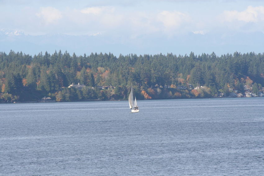 Autumn Autumn Colors Beauty In Nature Day Horizontal Nature Nature Nautical Vessel No People Outdoors Priest Point Park Puget Sound Sailboat Sky Tree Water