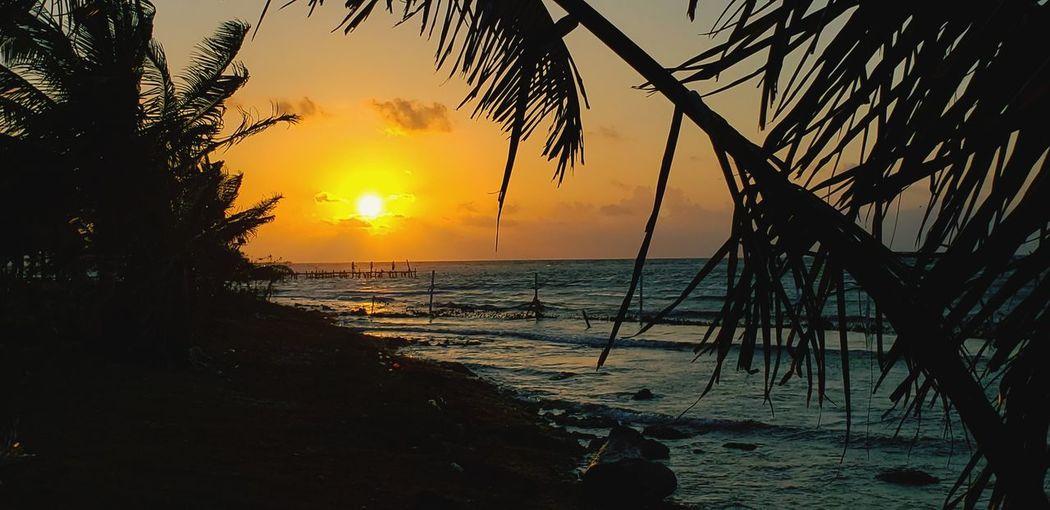 The Mobile Photographer - 2019 EyeEm Awards Tree Water Sea Wave Sunset Beach Horizon Sand Silhouette Sunlight