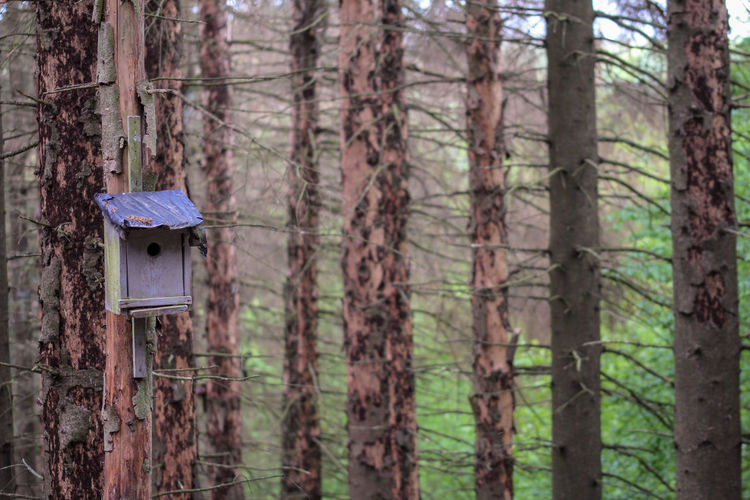 Close-up of birdhouse on tree trunk in forest