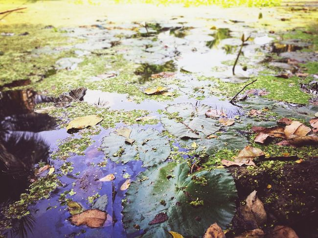 Water Nature High Angle View Outdoors Leaf No People Beauty In Nature Day Growth Close-up Floating On Water Freshness