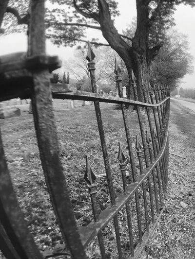 Fence Tree No People Fence Plant Day Boundary Barrier Nature Metal Protection Security Outdoors Safety Field Sunlight Railing Tranquility Land Close-up Tranquil Scene