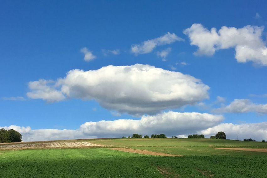 Field Sky Landscape Cloud - Sky Tranquil Scene Nature Tranquility Day Beauty In Nature Grass Agriculture Scenics No People Outdoors Blue Growth Rural Scene Tree