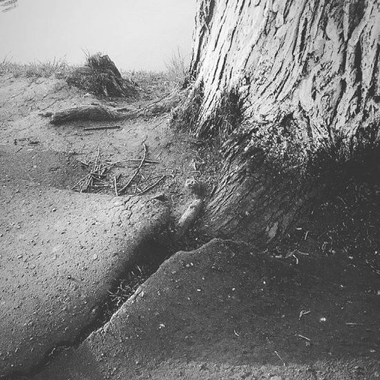 Nature and HUMANITY ... Who win's??? Nakedtree Nature_collection Humanity Lost Humanity...