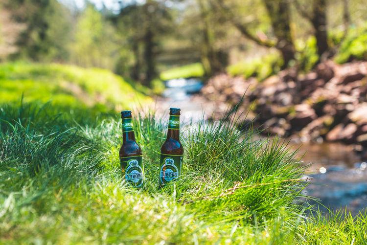 Tuborg by fishing in German mountains, in Schwarzwald Exploring Fun Drink Alcohol Tree Rural Scene Summer Bottle Drinking Glass Wine Bottle Close-up Beer Bottle Lager Beer - Alcohol Beer Brewery