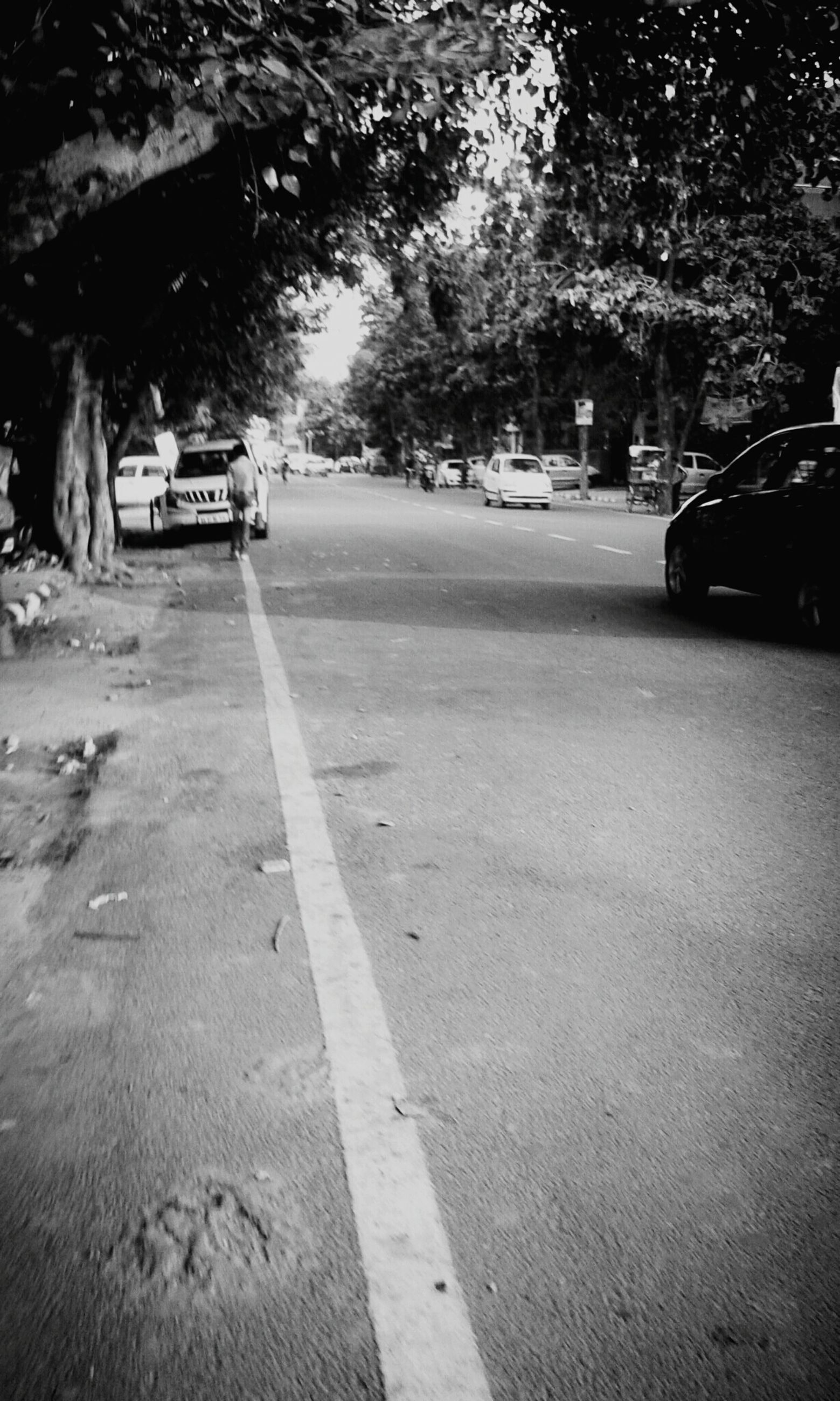 transportation, land vehicle, car, street, mode of transport, road, tree, road marking, the way forward, incidental people, sunlight, outdoors, shadow, on the move, travel, asphalt, day, city street, city, parking