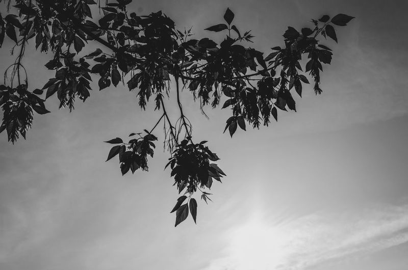watch the branch Berlin Tree Low Angle View Sky Plant Growth Nature Branch No People Hanging Leaf Beauty In Nature Plant Part Day Cloud - Sky Silhouette Tranquility Outdoors