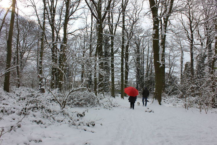 Rear view of person walking on snow covered land