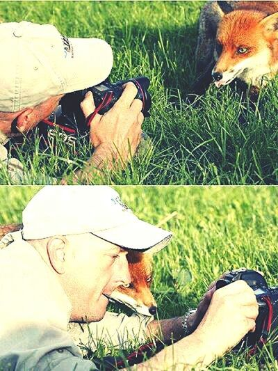 Taking Photos Check This Out Fox Popular Photos Hello World Happiness
