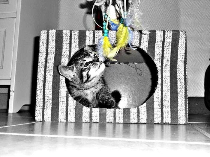 Cats Cute Animals