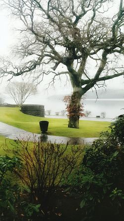 Tree Nature Water Grass Beauty In Nature Tranquility Outdoors No People Day Scenics Growth Sky Flower Landscape Branch Scotland LochLomond Tranquil Scene Trees Sky And Clouds Cameron House