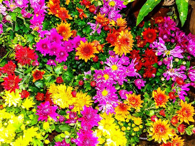 MULTI COLOURS Flower Backgrounds Freshness Fragility Multi Colored Variation Abundance Vibrant Color Beauty In Nature High Angle View No People Day Outdoors Full Frame Nature Petal