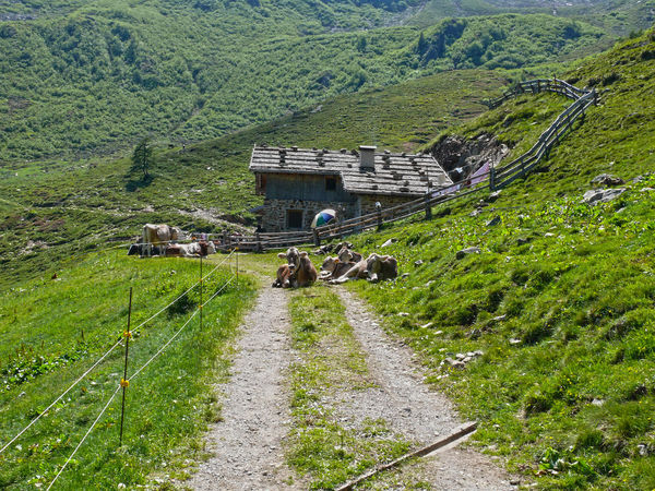 Alpine hut Alpine Hut Architecture Beauty In Nature Building Building Exterior Built Structure Day Environment Grass Green Color Group Of Cows Growth Italy Land Landscape Mountain Nature No People Outdoors Plant Proves Road Scenics - Nature South Tirol Tree