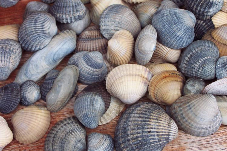 Muscheln Sammeln Meer Strand Mussels Animal Themes Backgrounds Beach Freshness Hintergrundbilder Hintergrundgestaltung Large Group Of Animals Large Group Of Objects Muschel Nature Outdoors Reise Seafood Seashell Shell Shells Urlaub Live For The Story Sommergefühle Still Life Fish Full Frame Wellbeing Animal Shell Animal Wildlife Seafood The Still Life Photographer - 2018 EyeEm Awards My Best Travel Photo