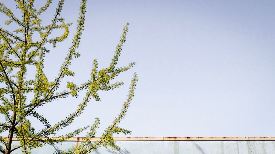 Low angle view of plant against clear sky