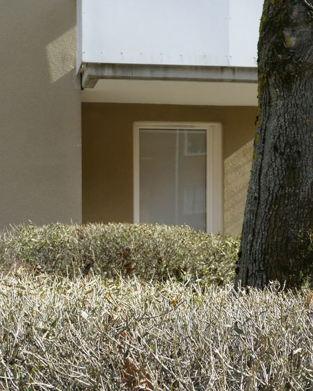 Composition with white balcony and tree Gärdet Sandhamnsgatan Window Balcony Tree Architecture