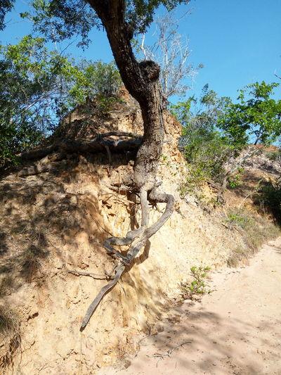 Holding Up Tree Canyon