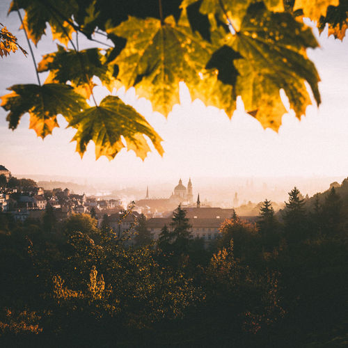 Sunrise at beautiful Prague park. #urbanana: The Urban Playground City Cityscape Czech Czech Republic Nature Prague Rooftop Architecture Autumn Beauty In Nature Building Built Structure Change Day Leaf Nature No People Outdoors Sky Sunrise Sunset Travel Destinations Tree Yellow