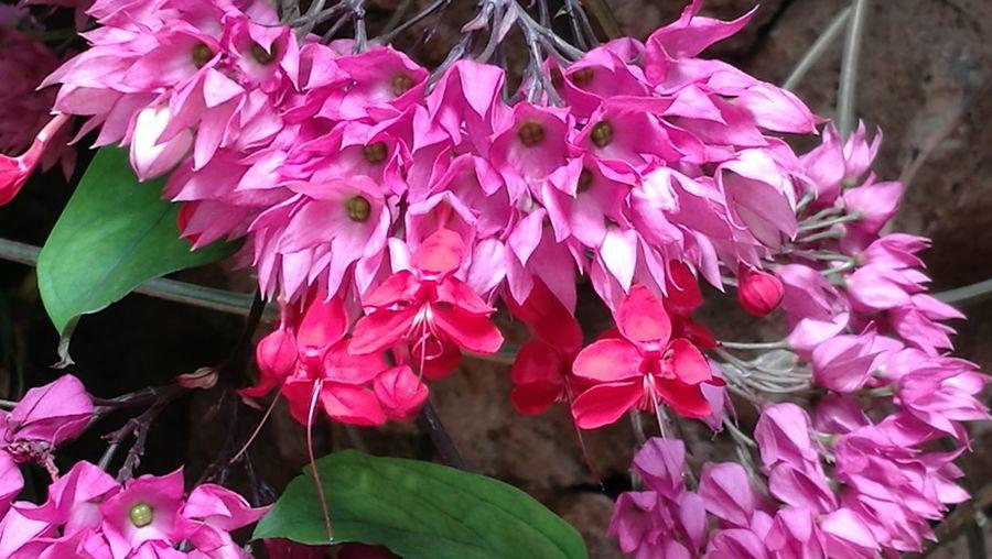 Flower Beauty In Nature Freshness