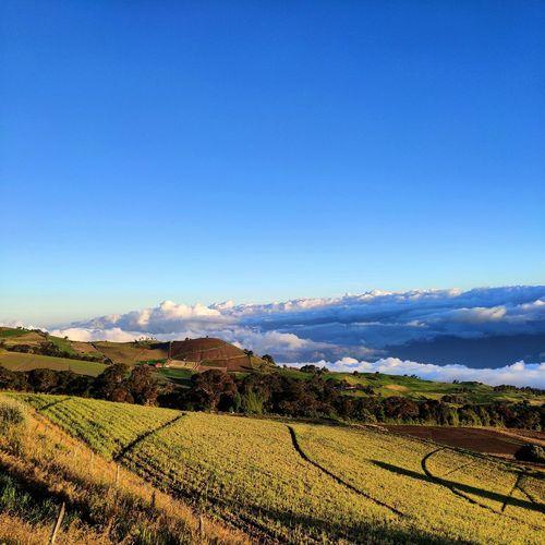 Is Mountain Rural Scene Agriculture Field Crop  Vineyard Farm Sky Landscape Mountain Range