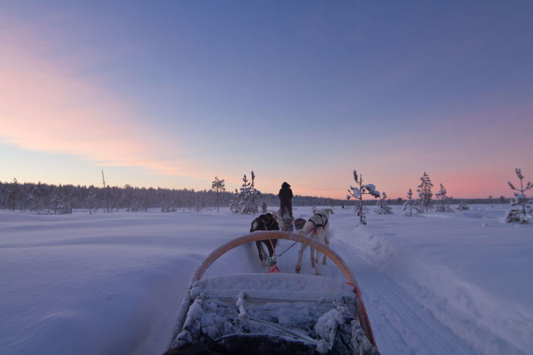 Husky dog sled ride at sunset in winter wonderland, lapland finland
