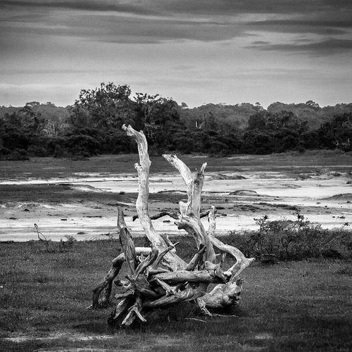 Bw SriLanka Nationalpark Record Yala Audioslave Recordcover