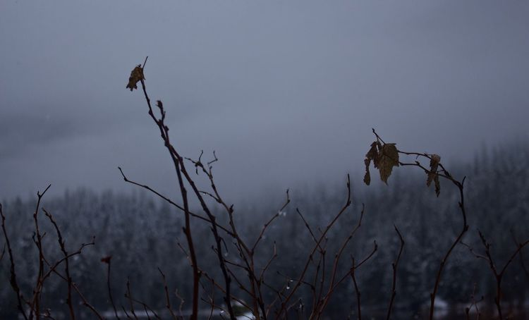 Remnants of autumn. Nature No People Outdoors Beauty In Nature Plant Branch Winter Frozen PNW