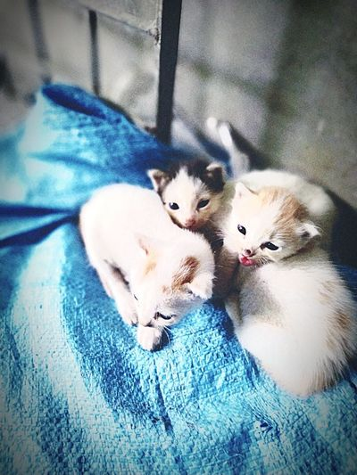 Two Animals Cat At Home Pet Bed Young Animal Home Infant Animal Family