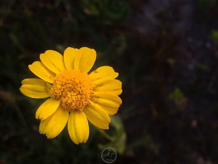 Flower Flowering Plant Yellow Fragility Vulnerability  Plant Beauty In Nature Nature