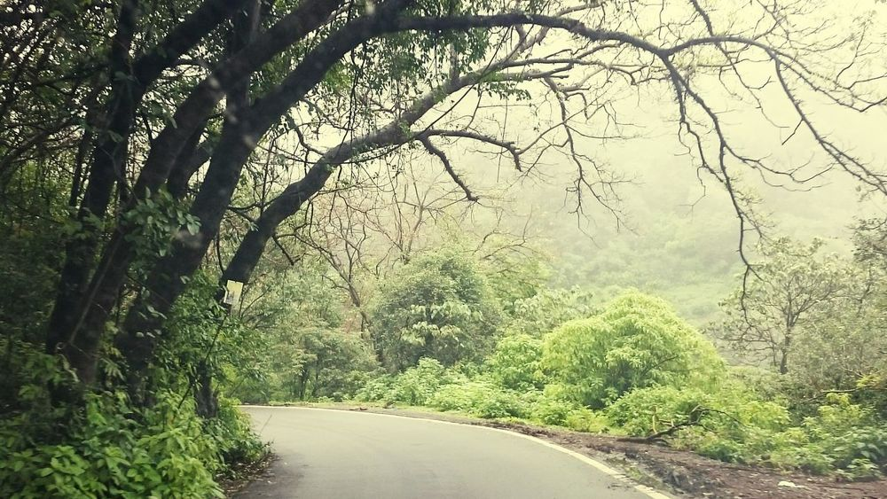 Tree Growth No People Nature Outdoors Green Color Freshness Trees And Leaves Day Branch Beauty In Nature Road Forest Scenics Water Sky nature frame EyeEmNewHere