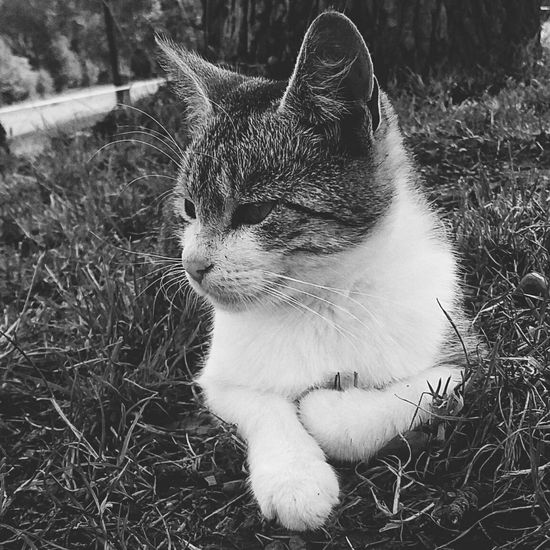 EyeEmNewHere Slovakgirl Slovaknature Pets Sitting Domestic Cat Portrait Grass Cat At Home Kitten Young Animal