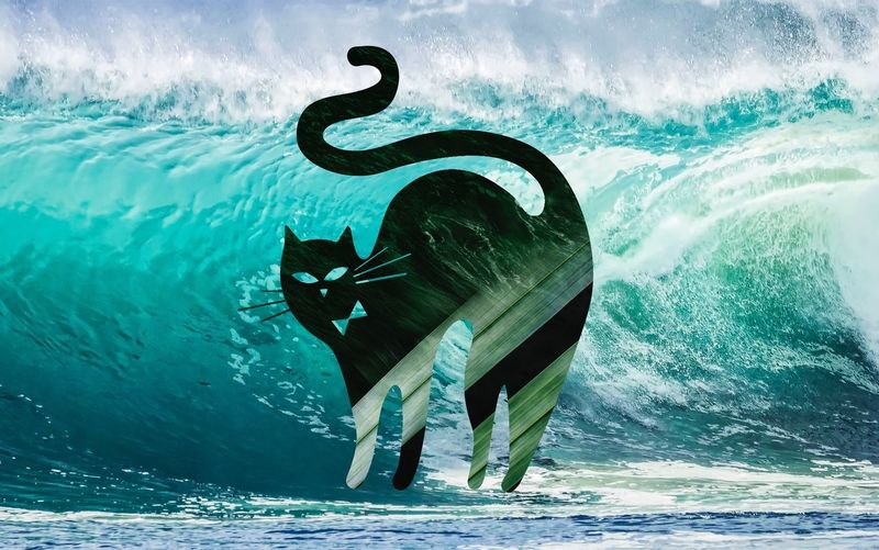 Cat Symbol Photoshop Water Animal Sea Animal Themes Animal Wildlife Nature Animals In The Wild EyeEmNewHere