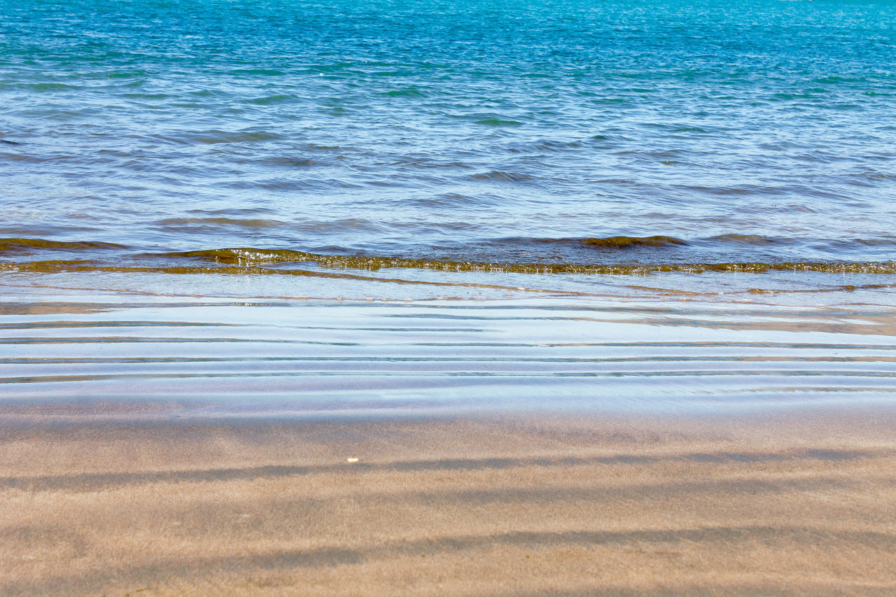 water, nature, beach, no people, outdoors, sand, animals in the wild, day, beauty in nature, sea, wave, animal themes, low tide, bird