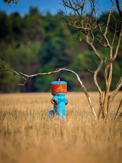 Blue Rusty Fire Hydrant By Plant In Grassy Field