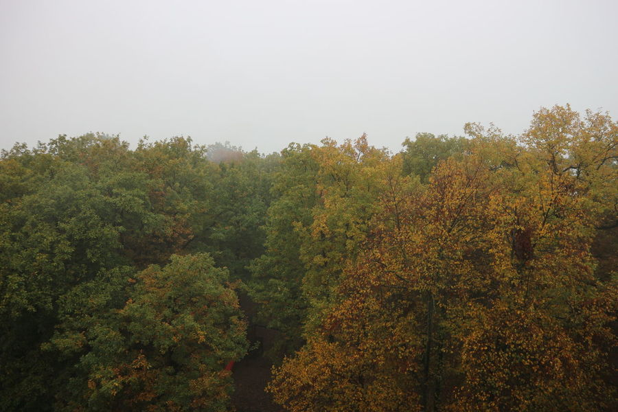 Tree Growth Nature Beauty In Nature No People Horizontal Tranquility Outdoors Sky Day Lush - Description Freshness Autumn Rainy Days Rainy Weather