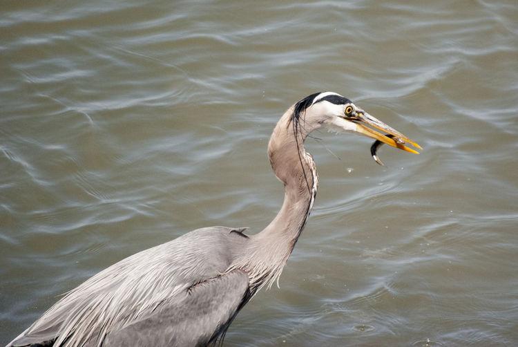 Close-up of bird in lake
