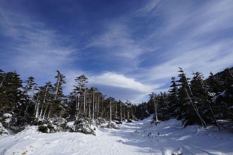 Trekkinng Mountain Range Mountain View Winter Snow Cold Temperature Tree Nature Pinaceae Cloud - Sky Landscape Mountain Outdoors