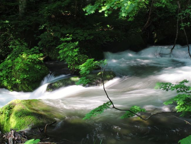 Water Waterfall Long Exposure Nature Beauty In Nature River Motion Riviere Social Issues Scenics Tree Wet Beauty Freshness Outdoors No People Forest Landscape Vacations Day Power In Nature Cascade Japon Japan Hiking